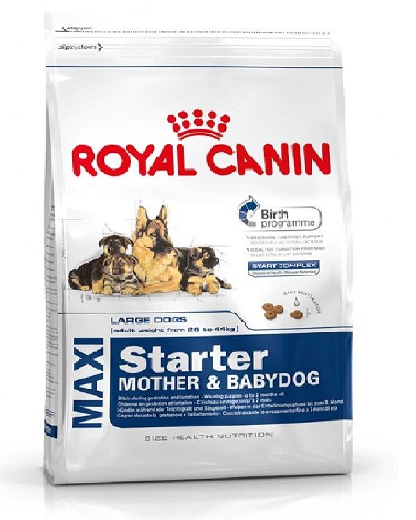 buy royal canin maxi starter food royal canin dog food online. Black Bedroom Furniture Sets. Home Design Ideas